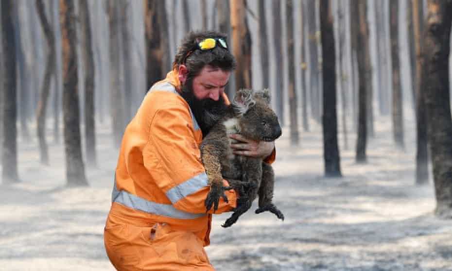 Adelaide wildlife rescuer Simon Adamczyk carries an injured koala on Kangaroo Island, South Australia, during last summer's devastating bushfires.