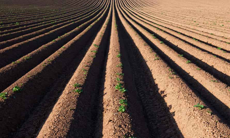 Ridge and furrow ploughed field pattern