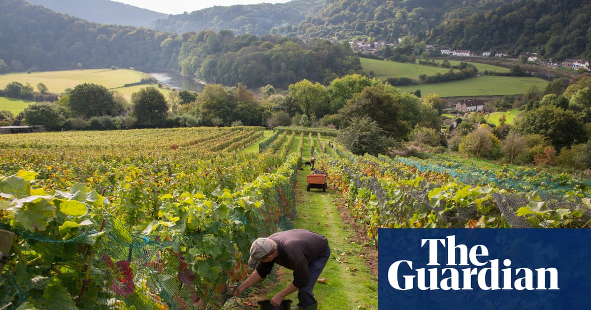 Sparkling days out: readers' favourite British vineyards to visit
