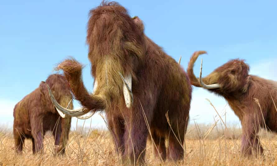 The last mammoth died only 4,000 years ago, which means that fragments of mammoth DNA can be recovered.