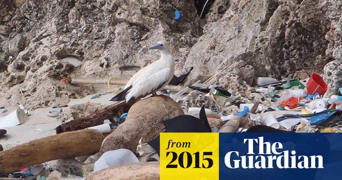Up to 90% of seabirds have plastic in their guts, study