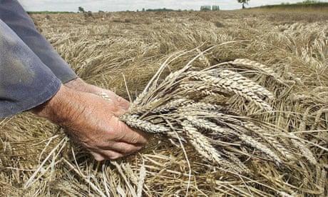 Monsanto's new $1bn herbicide shows our bias towards hi-tech solutions