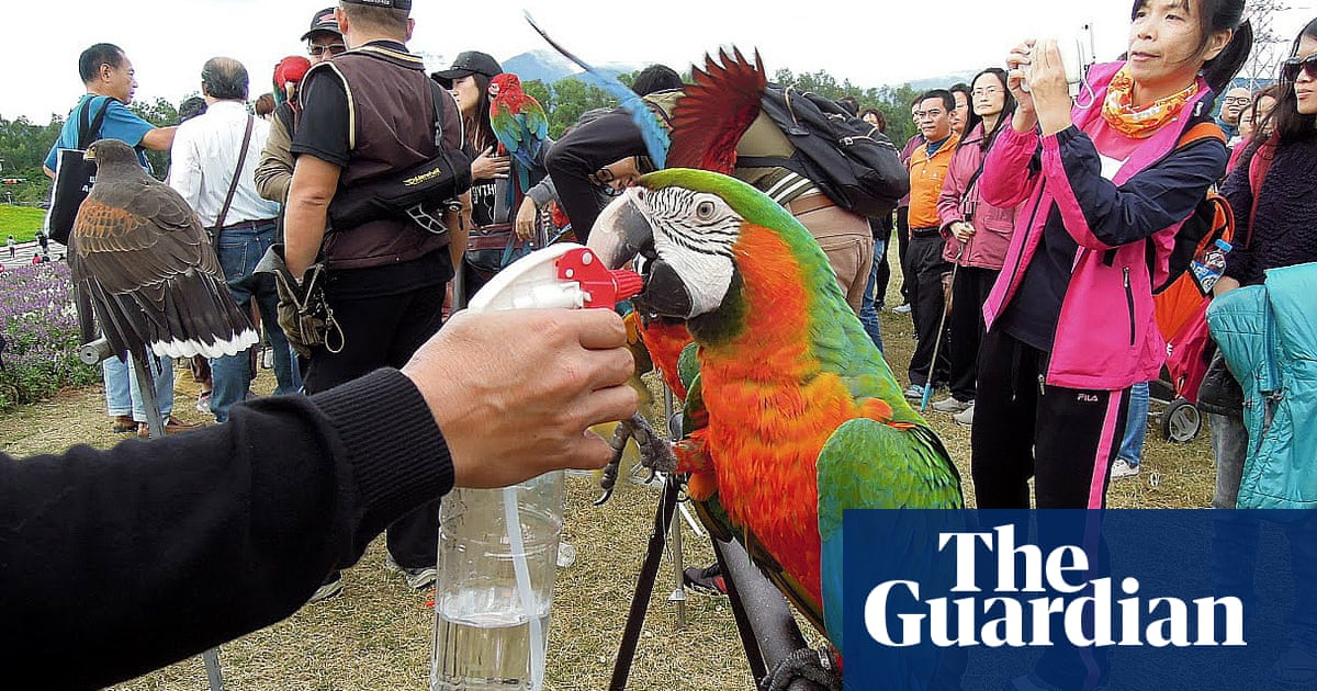 Hawk or dove? Birdwatching world's feathers ruffled over Taiwan independence – The Guardian