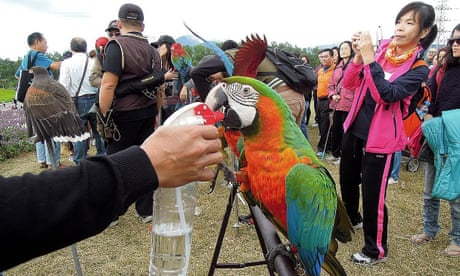 Hawk or dove? Birdwatching world's feathers ruffled over Taiwan independence