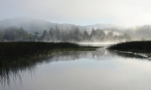 Siuslaw national forest, Oregon - the Pacific north-west might be an option for those wanting to flee from climate change's impact.