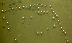 Pink flamingos above the low water in the Camargue, France.