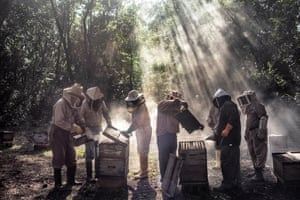 A group of beekeepers tending to their hives in Tinun, Mexico.