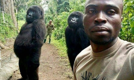 Mathieu Shamavu poses for a photo with the orphaned gorillas Nkakazi and Ndeze.