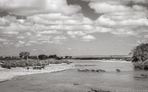 A herd of elephants crossing the Galana River in Tsavo East, Kenya