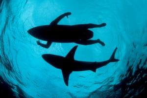 Thomas Pescha, The Shark Surfer, Finalist – Wildlife Photojournalist of the Year