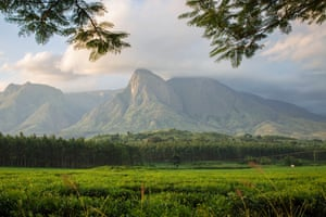 Mount Mulanje seen from the tea estate at its base