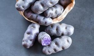 The colour purple: the Vitelotte variety of gourmet French blue-violet potato.