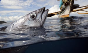 A fish is caught by hook and line in a bay protected from large-scale commercial fishing, in the Philippines