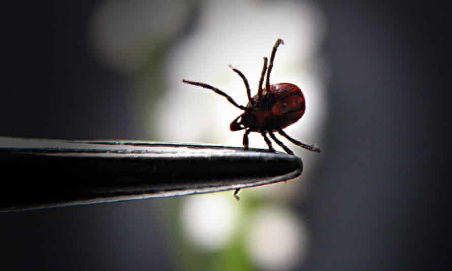 A tick held in forceps