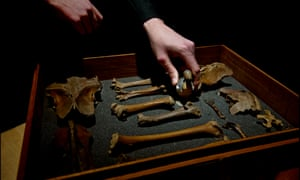 Mark Carnall, former curator of the Grant Museum of Zoology at UCL, with a drawer of dodo bones that had previously been misidentified and stored with crocodile bones.
