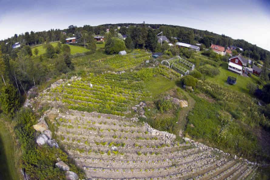 Longer drier summers are boosting the Nordic wine industry