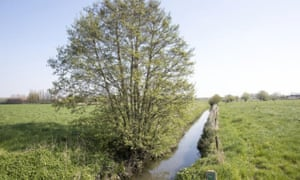The stream in west Flanders named as Europe's most polluted.