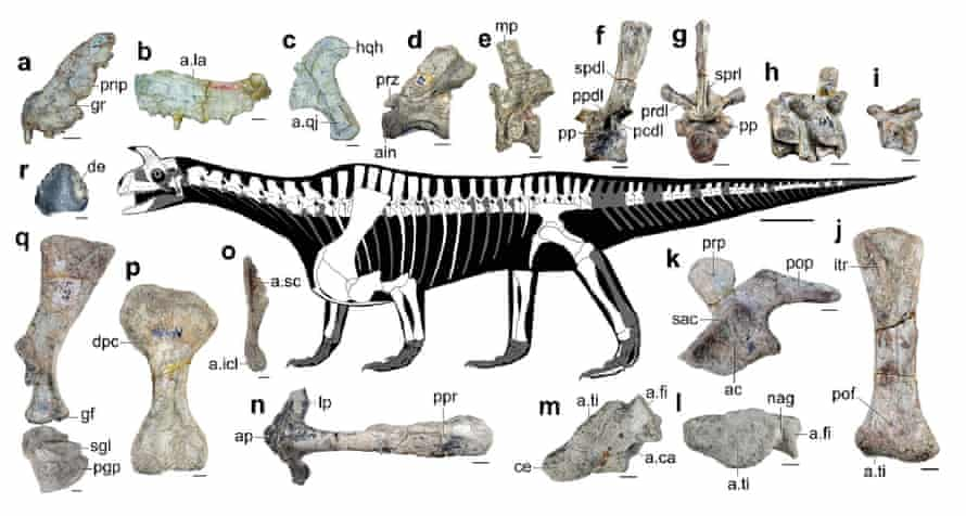Shringasaurus indicus, a Triassic reptile from India, with an unusual body shape and forward facing horns.