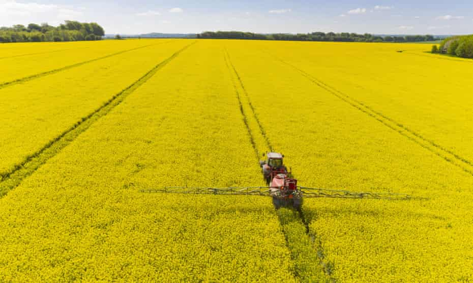 Oilseed rape is by far the most widely grown UK crop whose seeds have been treated with neonicotinoids. The flowers are visited by bees, and are now widely blamed for killing these bees.