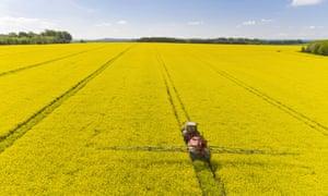 A tractor sprays pesticides on oilseed rape
