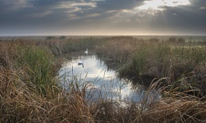 Elmley marshes.