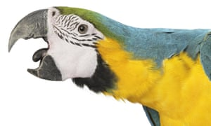 A parrot is about as smart as a three-year-old child, with similarly complex needs.