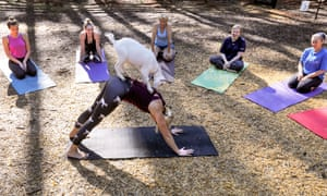 A goat yoga class at Serenbe retreat in Chattahoochee Hills, Georgia.
