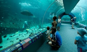 The Reef HQ is a popular place for families to visit and its walk-through coral reef aquarium is the largest in the world.