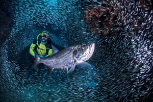 George Town, Cayman Islands A scuba diver is surrounded by schools of Silversides in the Devil's Grotto area. Each year, for only a few weeks, these schools form massive pulsating clouds in the caves, tunnels and swim-throughs, according to researchers
