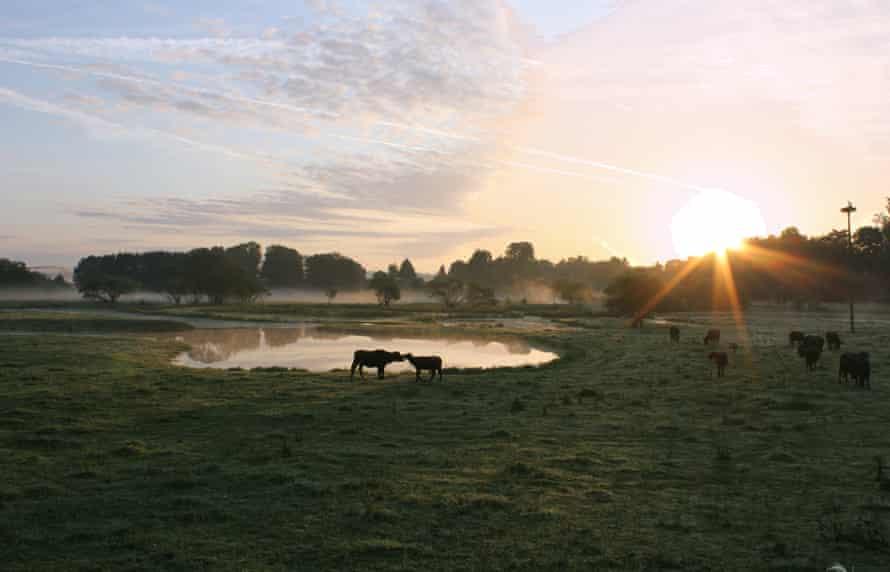 Saarland Bliesgau: water buffalo in the UNESCO biosphere reserve