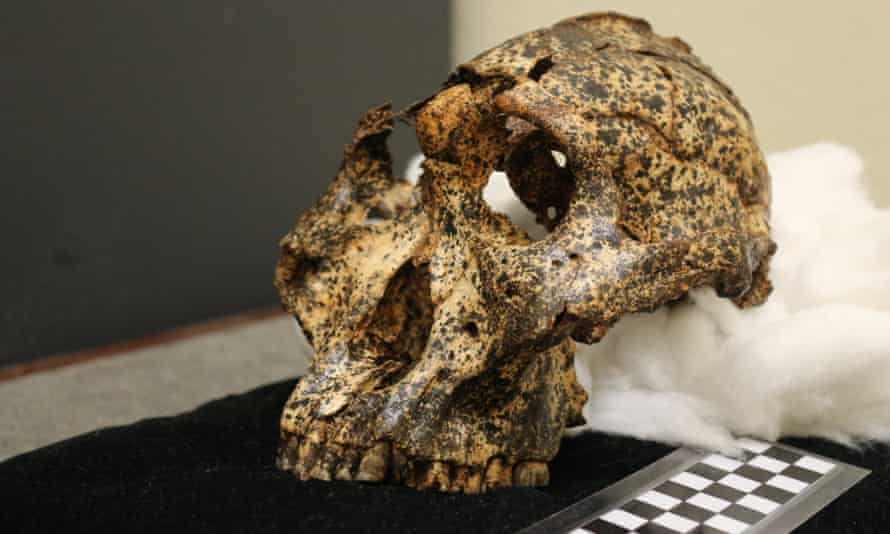 An old skull