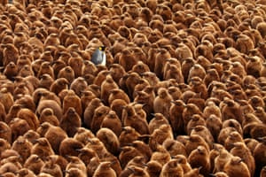 Overall winner: Stand Out From the Crowd, photographed on Marion Island (Prince Edward Islands)