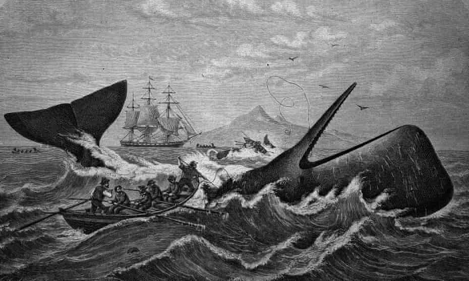 A woodcut showing a sperm whale being hunted by whalers, c 1870.