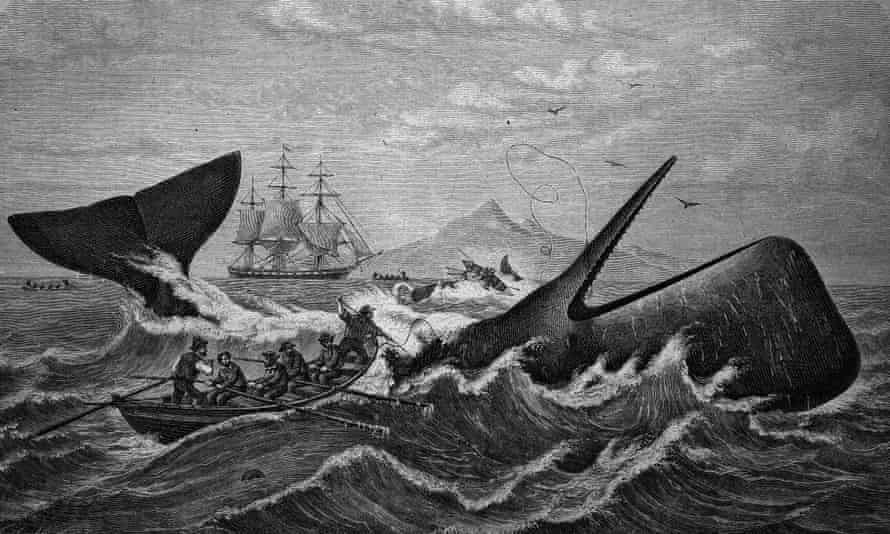 Sperm whale being hunted by whalers, historical woodcut, circa 1870