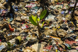 A mangrove shoot surrounded by plastic in Jakarta, Indonesia. Indonesia has been ranked the second biggest marine polluter in the world behind only China, with reports showing that the country produces 187.2m tonnes of plastic waste each year. This week, the government announced it will join forces with the country's two largest Islamic organisations, Nahdlatul Ulama (NU) and Muhammadiyah, using their extensive networks across the world's largest Muslim-majority nation to encourage consumers to reduce plastic waste and reuse their plastic bags.