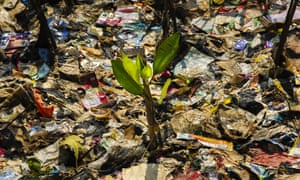 A mangrove surrounded by plastic trash in Jakarta, Indonesia, May 2018.