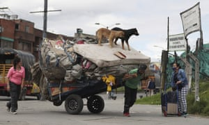 Bogotá, Colombia: dogs stand on a mattress as it is hauled on a recycling cart