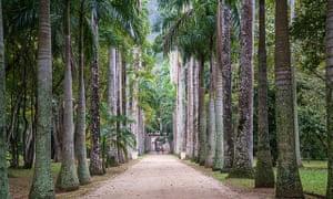 Palm tree avenue at the Jardim Botânico