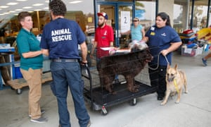Volunteers move rescued dogs.