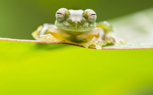 Up close and personal student winner: Look into my Eyes, photographed in Costa Rica
