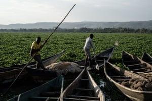 Fishermen turn a boat on Lake Victoria, Kisumu, western Kenya. The lake is covered by water hyacinth.