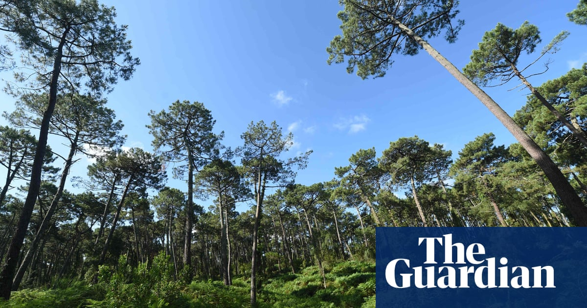 'Enough with the burning': EU executive accused of sacrificing forests