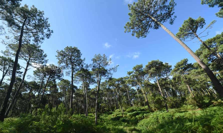 The European Commission's forest strategy includes a goal to plant 3bn trees across the EU by 2030.
