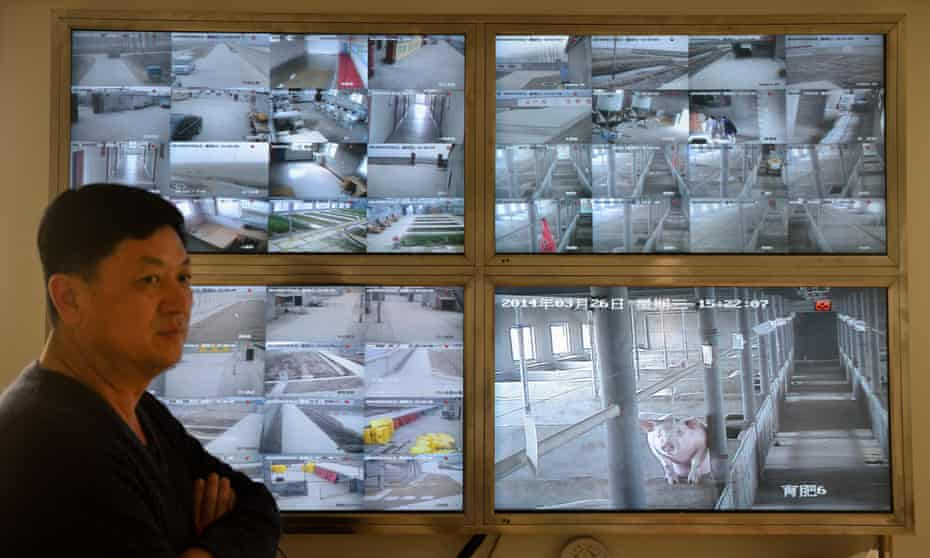 The boss of a pig farm in Tangshan, Hebei in front of a wall of CCTV screens.