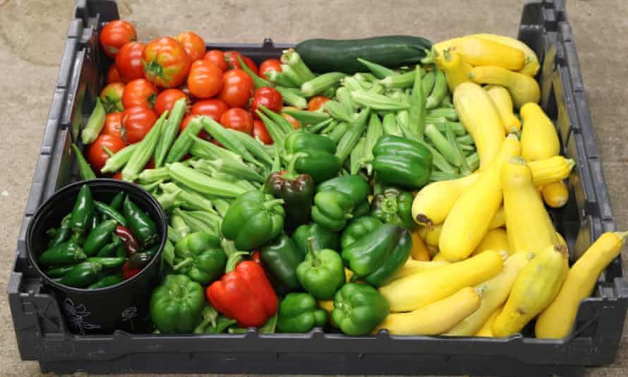 A crate full of vegetables such as tomatoes, green peppers and green chillies
