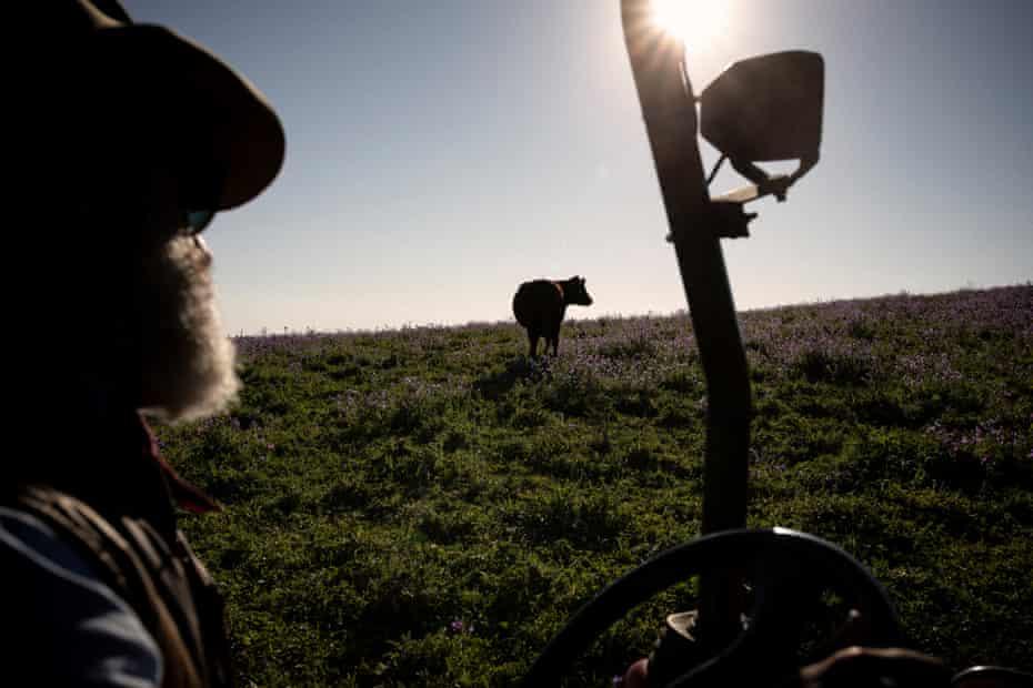 Charlie Arnott checks on his cattle.