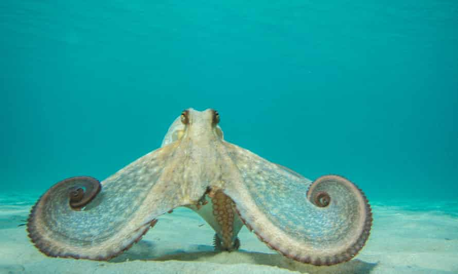 'If My Octopus Teacher is a love story, as described, it is less Portrait of a Lady on Fire, and more Garden State.'