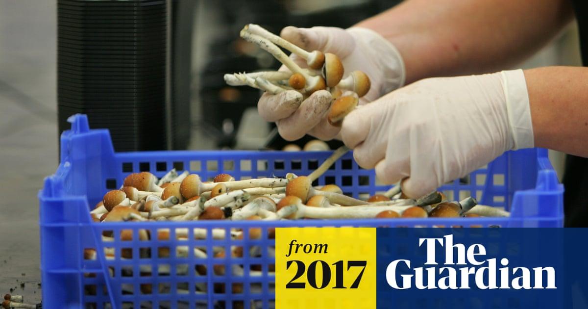 Magic mushrooms 'reboot' brain in depressed people – study