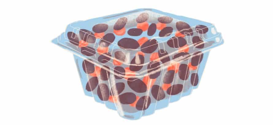 clamshell illustration