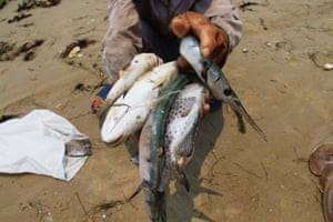A villager shows dead sea fish collected from a beach in Phu Loc in Vietnam